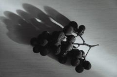 Resting grape